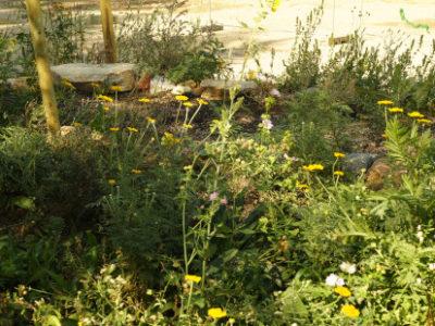 Von Wildblumen und Menschen